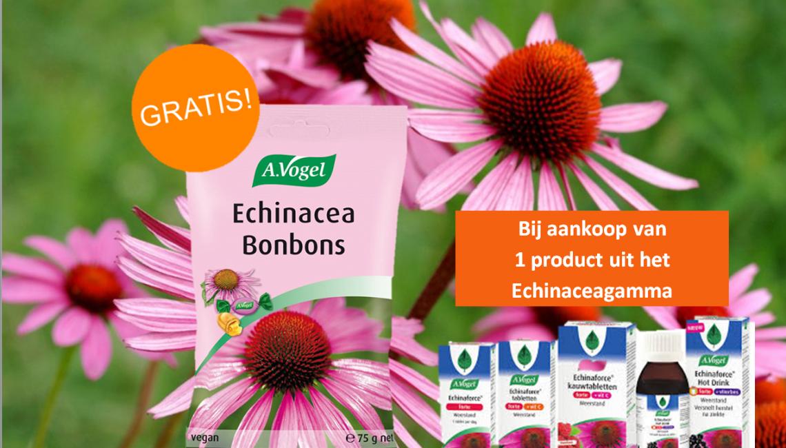 Vogel Echinacea